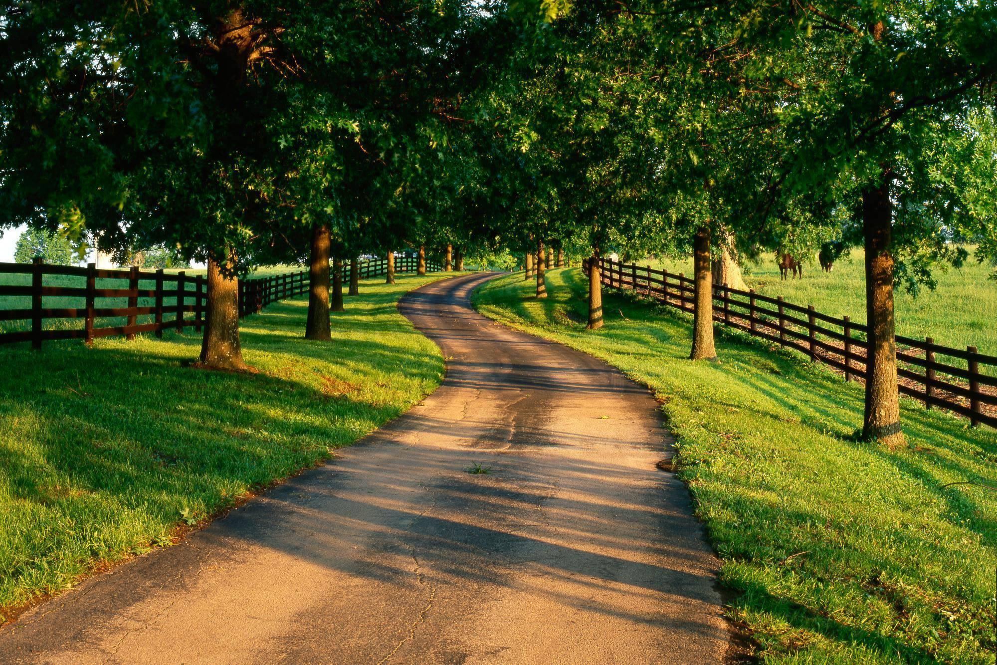 Дорога вдоль олеи меж полями скачать