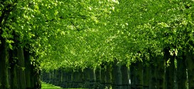 nature-green-spring-trees-beautiful-beauty-grass-leaves-lovely-2610074